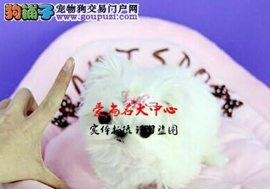 北京最大马尔济斯基地 完美售后 质量三包 可送货上门
