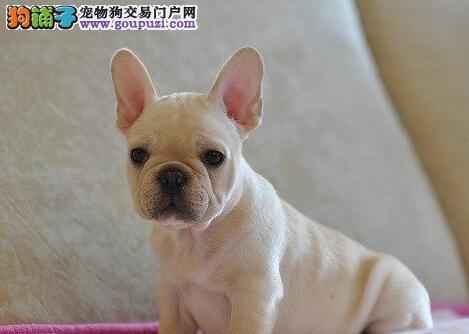杭州主城区CKU注册犬舍