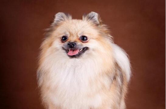 喜欢狗狗,养几只宠物狗最合适?
