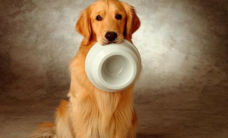 五种适合家养的中大型犬,金毛上榜