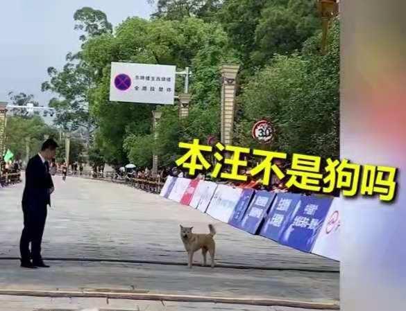 狗狗误入马拉松赛道,紧跟运动员通过终点