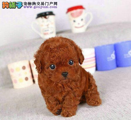 可爱玩具体泰迪宝宝出售