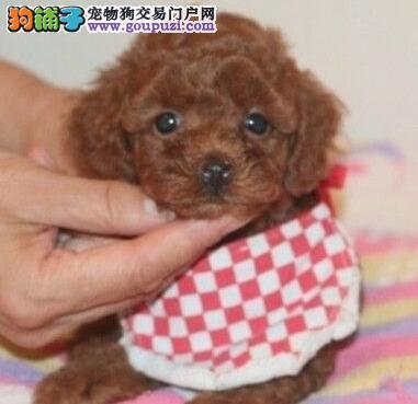 重庆哪里有卖贵宾犬的 什么地方有卖好点的贵宾犬