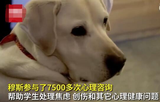 真好嗑!8岁治疗犬获博士学位是怎么回事