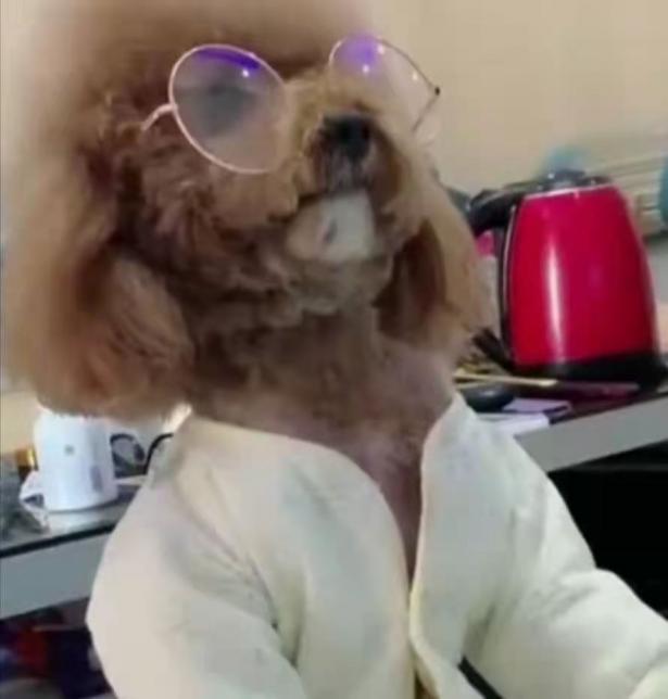 狗狗原来也会看电视!铲屎官还特意给狗狗配了眼镜6