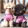 泰迪犬颜色图片