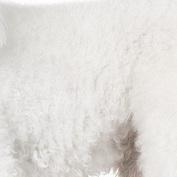 贵宾犬毛发图片