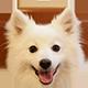 银狐犬头像