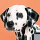 斑点狗头像