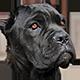 卡斯罗犬头像