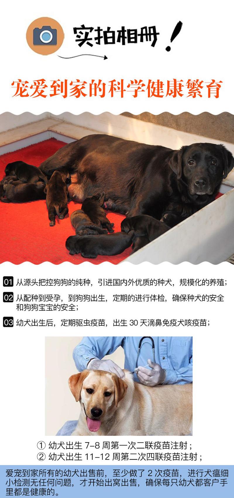 可上门选购〖签协议包健康〗免费送用品、精品阿富汗犬