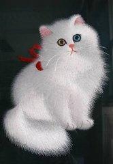 官方推荐猫舍 7天无理由退货 正规CFA猫舍 波斯猫出售