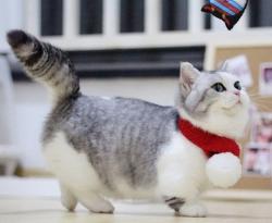 官方推荐猫舍 7天无理由退货 正规CFA猫舍 曼基康猫