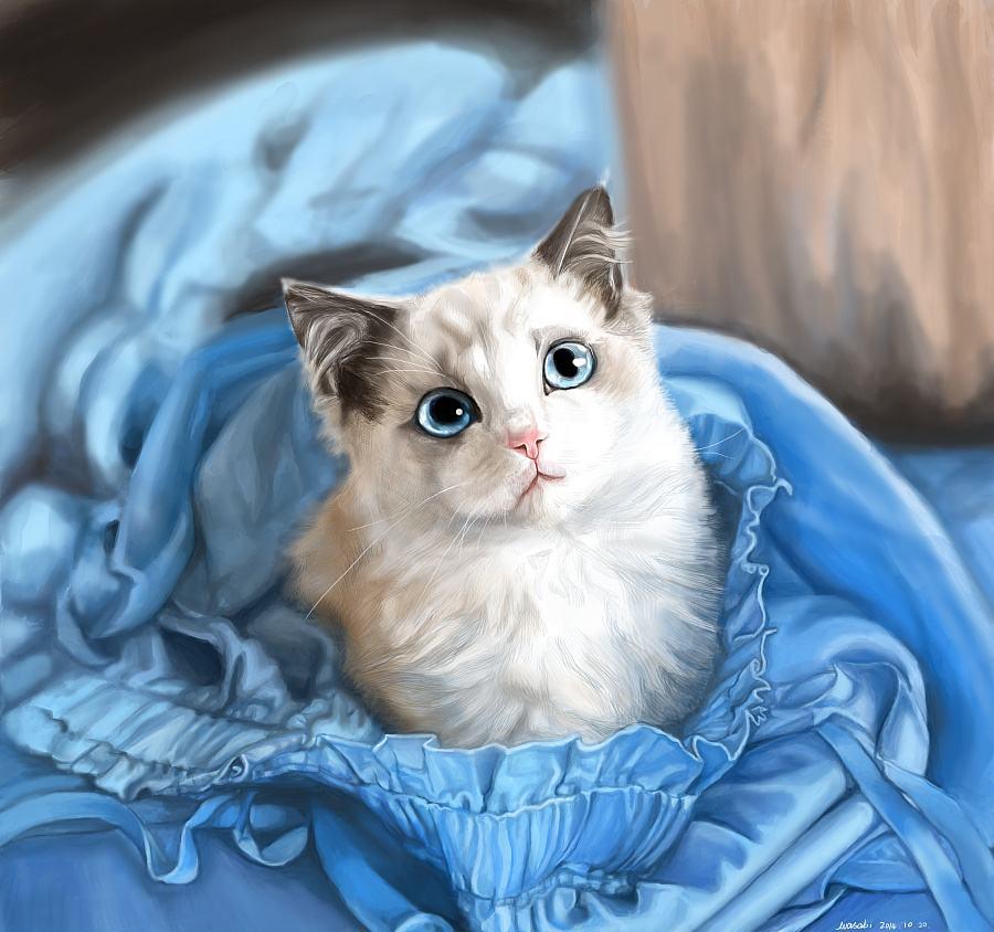 官方推荐猫舍全国签订协议 包纯种健康 布偶猫