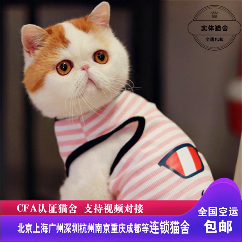 CFA认证注册猫舍