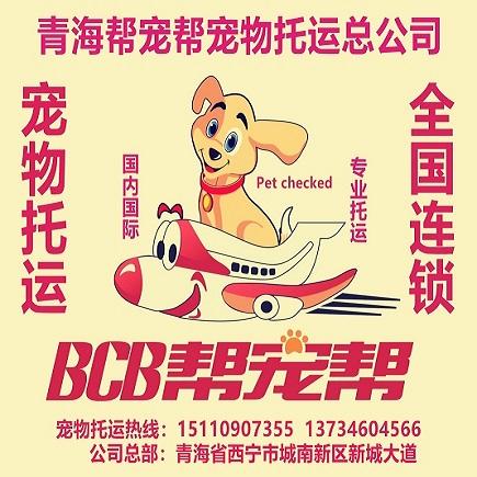 西宁托运猫猫狗狗为什么都找西宁帮宠帮和西宁友鑫宠物托运