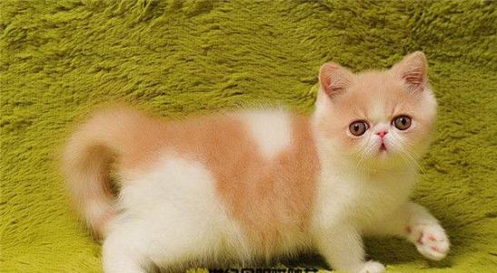 买猫就来这挑选多又便,广州哪里有卖加菲猫