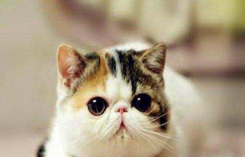 广州哪里有卖加菲猫广州有没家养或者猫舍啊?