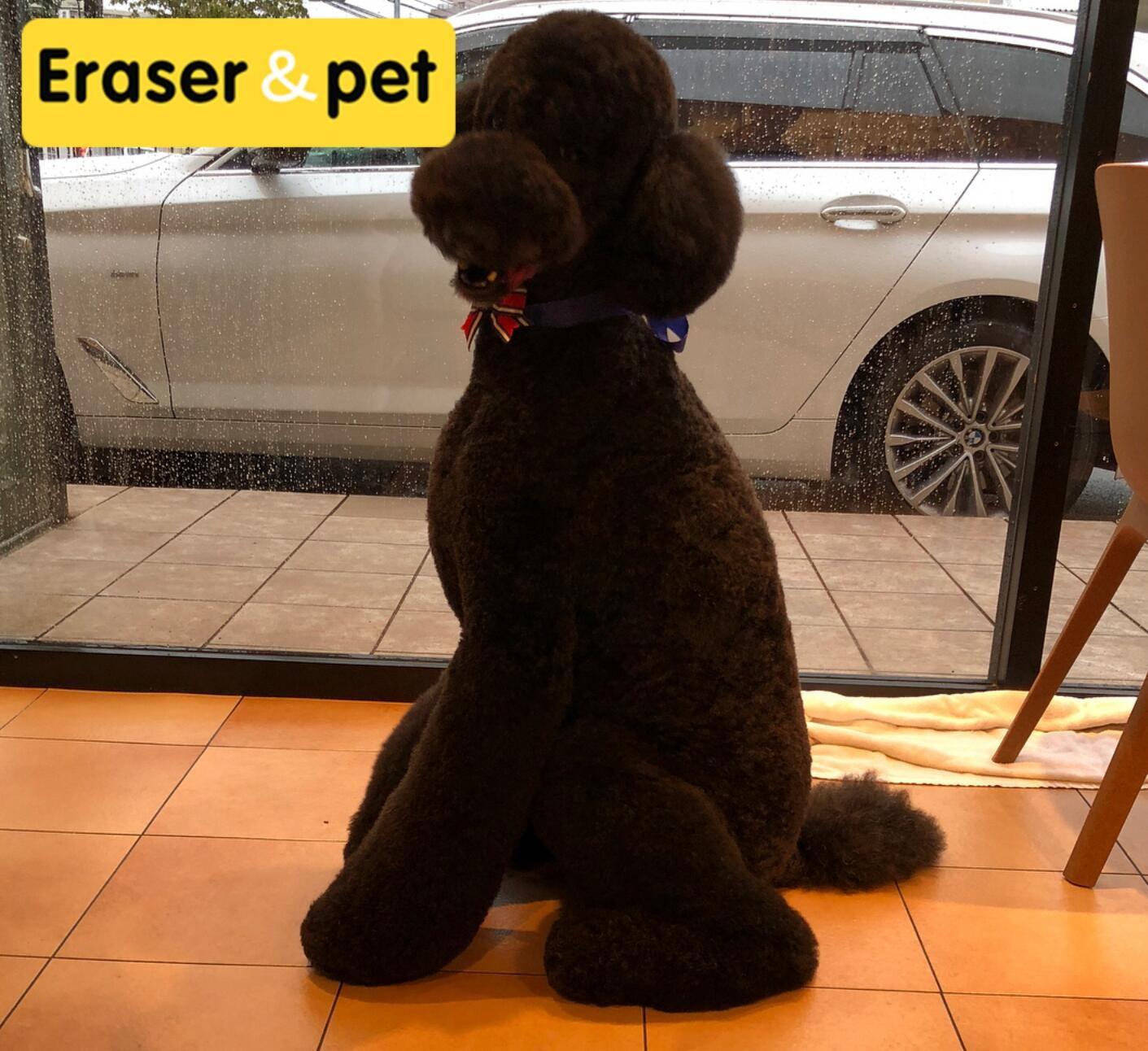 权威机构认证犬舍、专业贵宾犬培育、完美售后